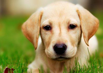 kutyabarat-szallas
