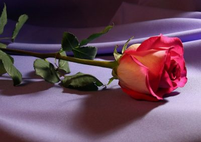 Romantic-Rose-Wallpaper